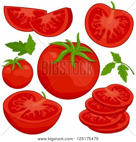 Vector illustration of whole and sliced ripe fresh tomatoes on white background, isolated