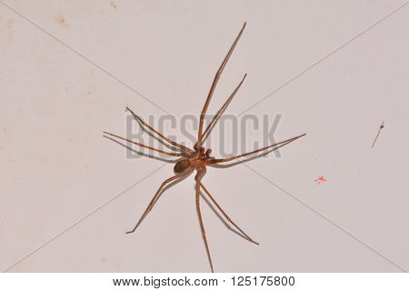 Photo Picture of a Brown Spider on The Wall