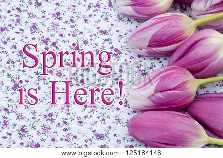 Spring is Here Greeting, Some tulips on purple flowered fabric and text Spring is Here