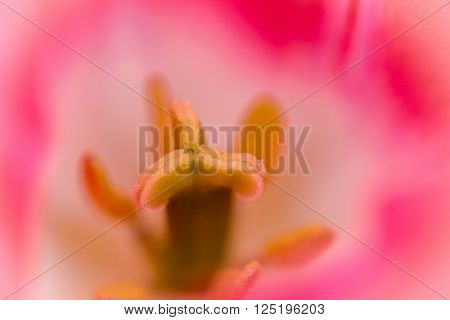 Macro Detail Of Pistil Of A Flower