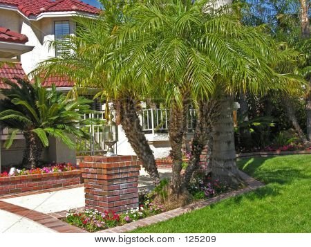 Housefront With Palm Trees