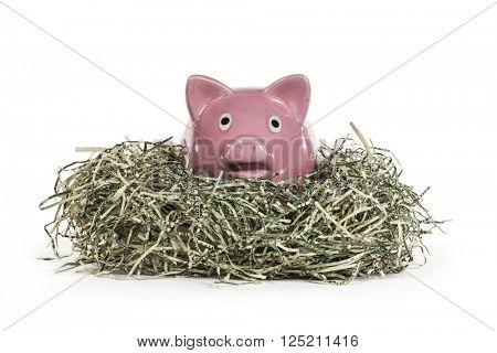 Old piggy bank relaxing in shredded US dollar nest.