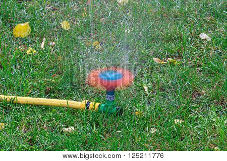 Lawn sprinkler in move on green lawn