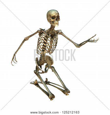 3D Illustration Human Skeleton On White