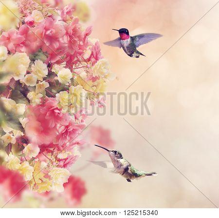 Hummingbirds in Flight Around Flowers