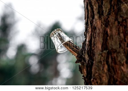 Little glass hanging on the pine tree speck.