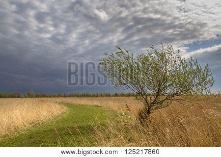 Willow Tree April