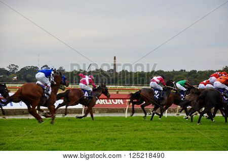 BURSWOOD,WA,AUSTRALIA-MAY 30,2014: Jockeys racing horses on the green grass track at the Belmont Park Racecourse in Burswood, Western Australia.