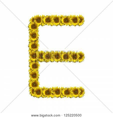 Sunflower alphabet isolated on white background, letter E