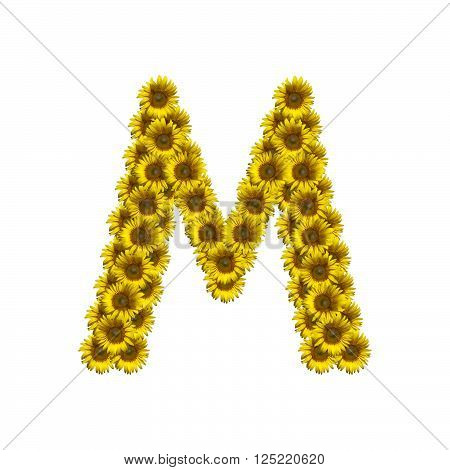 Sunflower alphabet isolated on white background, letter M