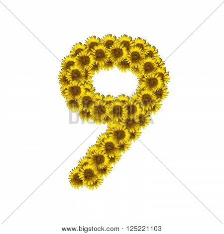 Sunflower number isolated on white background, number 9