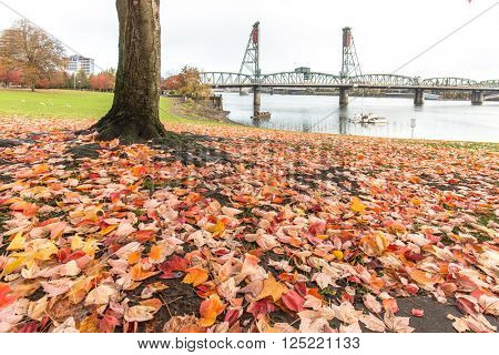 steel bridge over tranquil water on view from tree in park in portland