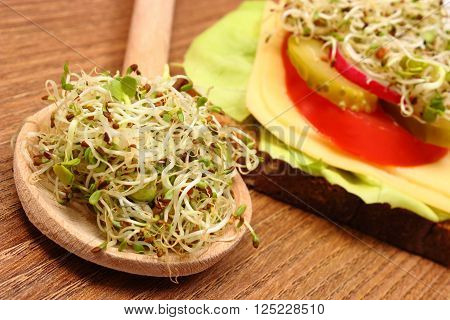 Alfalfa and radish sprouts on wooden spoon and freshly prepared vegetarian sandwich lying on wooden table, concept of healthy lifestyle diet food and nutrition