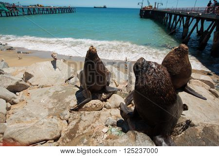Feeding The Pelicans And Sea Lions