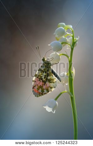 Butterflies immediately after the beetles are the second largest group of insects. Currently, there are around 150,000 species of butterflies