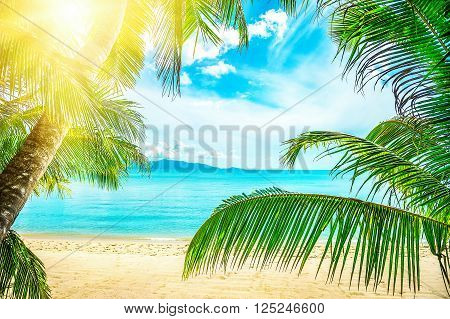 Coconut palm tree on the sandy beach. Vacation concept