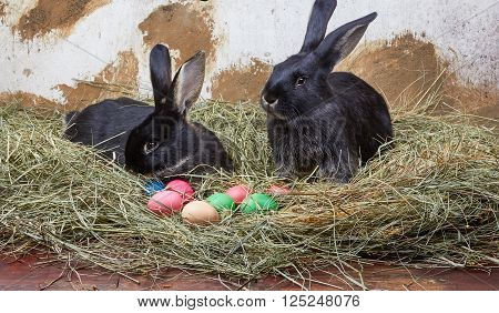 Little rabbits lie on hay near Easter eggs