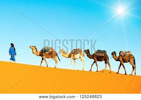 Camel caravan on the Sahara desert, Morrocco