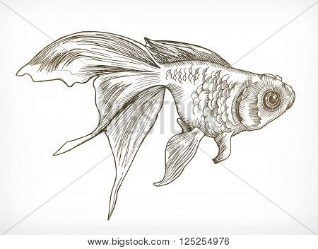 Gold fish sketches, hand drawing, vector