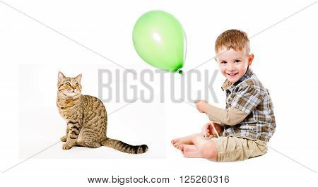 Cheerful boy and curious cat Scottish Straight isolated on white background