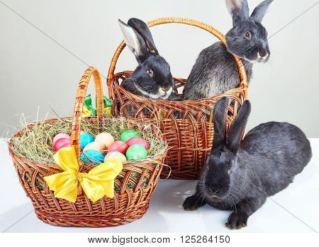 Near with Easter basket sitting black rabbits