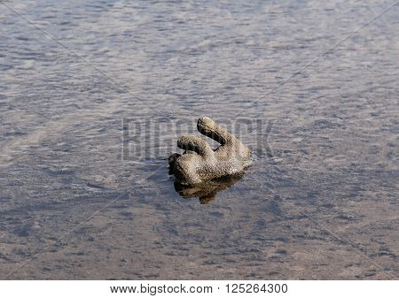 lost stuffed toy in the mud and water