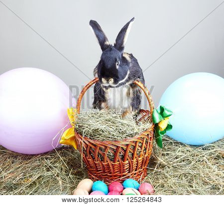 Little rabbit and easter basket on hay