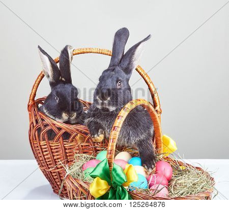 Rabbits and Easter basket with colored eggs
