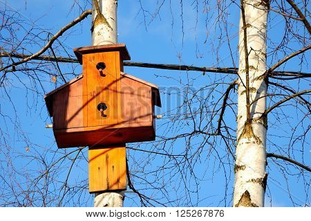 nesting box on a birch against the background of the blue sky