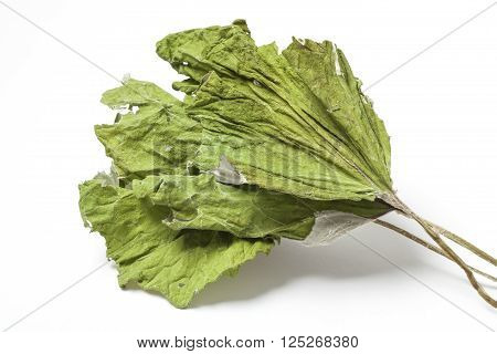 Three dried herbs coltsfoot leaves isolated on white background