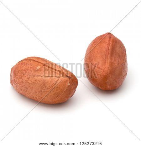 peanut or groundnut isolated on white background close up