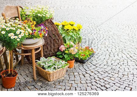 yellow flowers in front of florist's shop with place for text