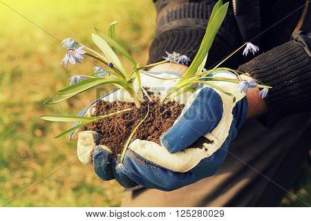 hands holding seedling flower with fertile soil