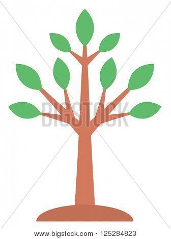 Large deciduous tree.