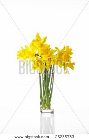 narcissus isolated on white background, summer flowers in glass, with reflection