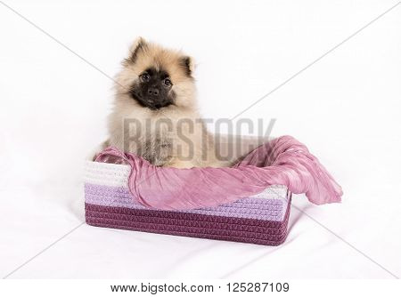 Funny puppy in the box on a white background