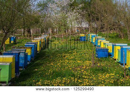 Bee Hives In Spring Garden