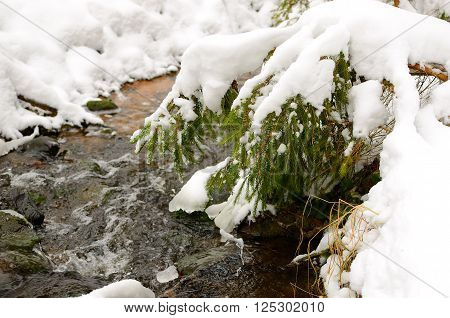 Small snowcovered forest stream in winter. Green fir tree branch next to a forest river.