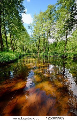 Forest river scene. Brown peat water. Green summer trees.