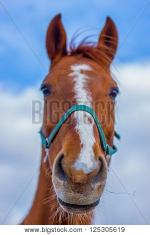 Horse smile on the portret background sky