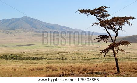 Tree Against Of Beautiful Background Of Serengeti National Park