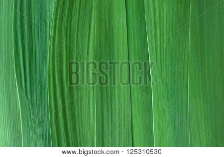 Green leaves closeup. Abstract green background for design. Natural texture