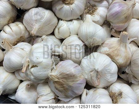 A closeup of numerous fresh Garlic bulbs. Garlic has a history of human use of over Seven Thousand years.