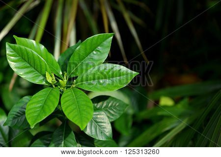 Tropical tree leaves in exotic tropical forest.