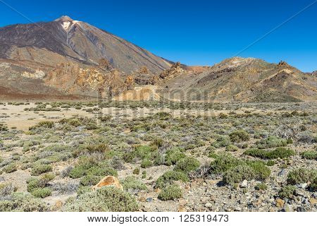 Sparse vegetation at the foot of the volcano Teide on Tenerife wakes up under the first rays of warm spring sun.