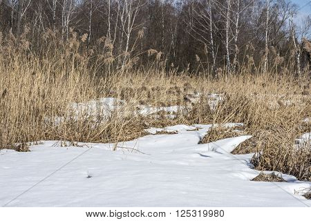 The first patches are formed on the edge of the spring forest in March. Russia. ** Note: Shallow depth of field