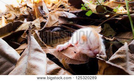 Abandoned newborn kitten on beautiful autumn foliage