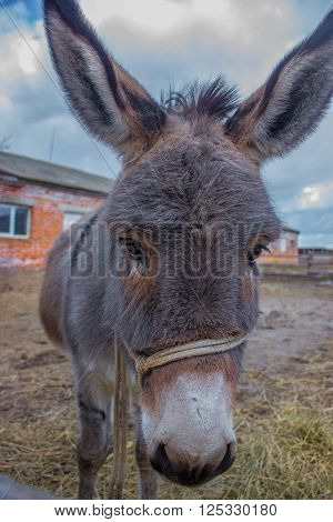 donkey smile on the portret on farm