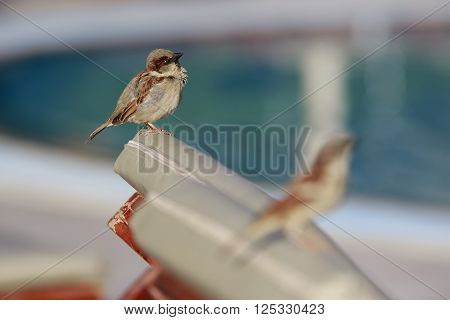 Pair of sparrows sit on a chaise-longue