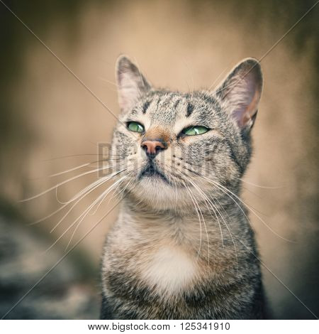 Portrait striped tabby cat - small focus